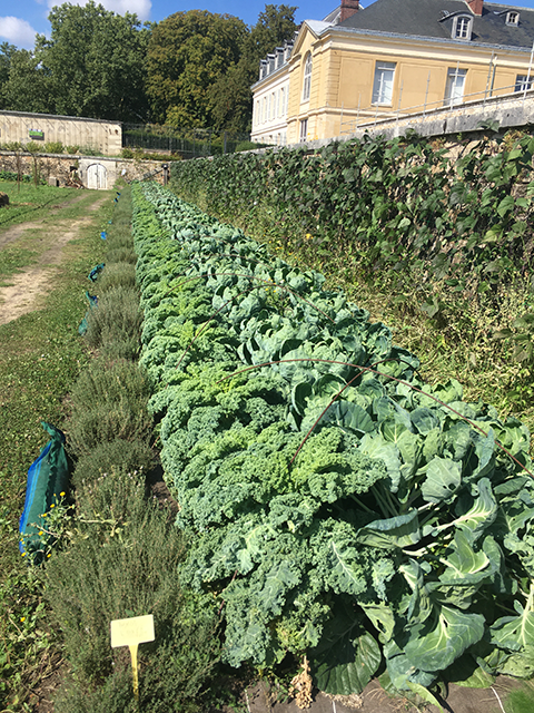 1_1_Cotiere_brassicacees_AJ_sept21_IMG_1448_site